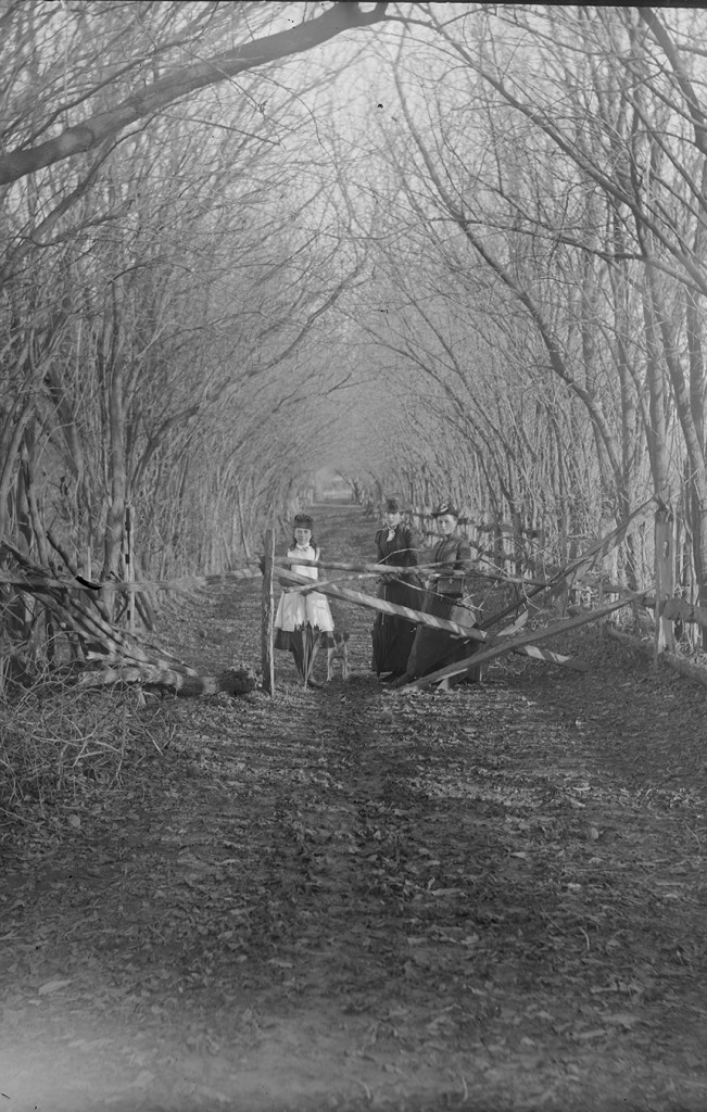 Group of women at the entrance to the avenue of trees, possibly Ballarat-Daylesford-Bacchus Marsh area. ca 1890-ca 1915. Courtesy of the State Library of Victoria.